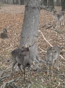 Lainzer Tiergarten viena