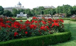 v rosas