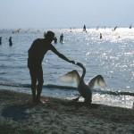Neusiedlersee, el mar de los vieneses