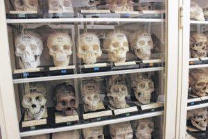 museo de las anatomías patológicas